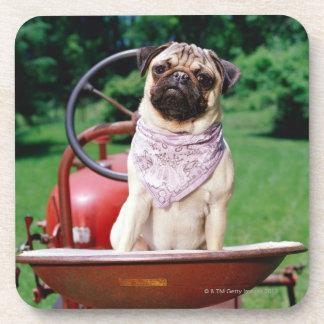 Pug on lawnmower wearing bandana beverage coasters