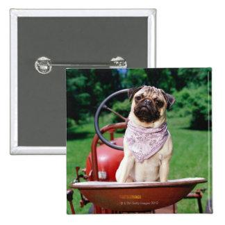 Pug on lawnmower wearing bandana button