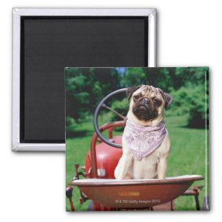Pug on lawnmower wearing bandana refrigerator magnet