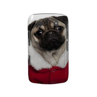 Pug puppy (6 months old) wearing a Christmas Blackberry Bold Cases