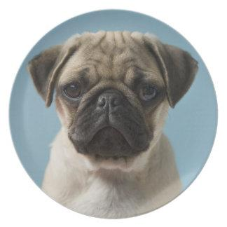 Pug Puppy Against Blue Background Dinner Plates