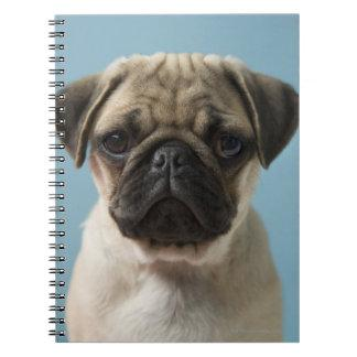 Pug Puppy Against Blue Background Note Books
