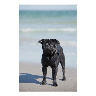Black Pug Standing On The Beach Poster