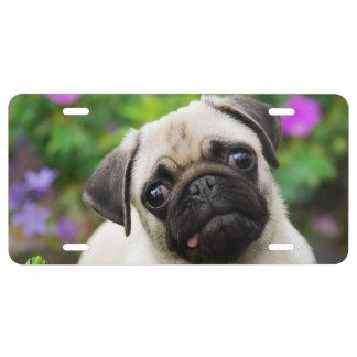Cute fawn pug puppy license plate