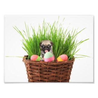 Easter pug puppy photo print