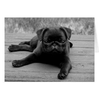 Pug Puppy Dog Black & White Blank  Note Card