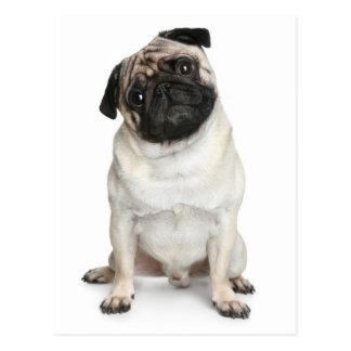 Pug Puppy Dog Greeting Postcard