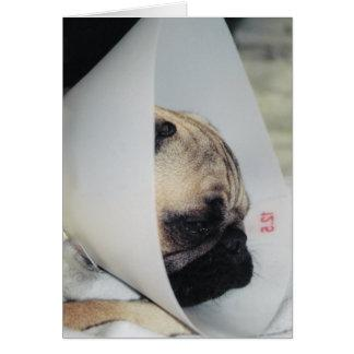 Puggy Get Well Greeting Card